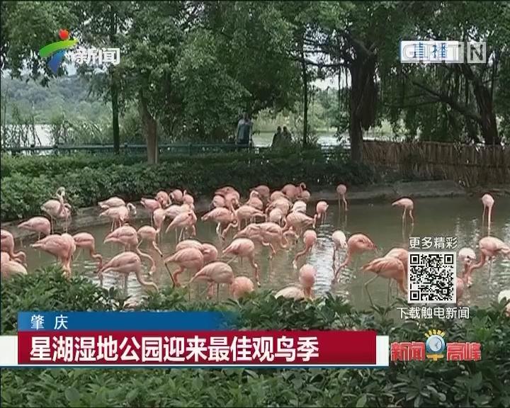 肇庆:星湖湿地公园迎来最佳观鸟季