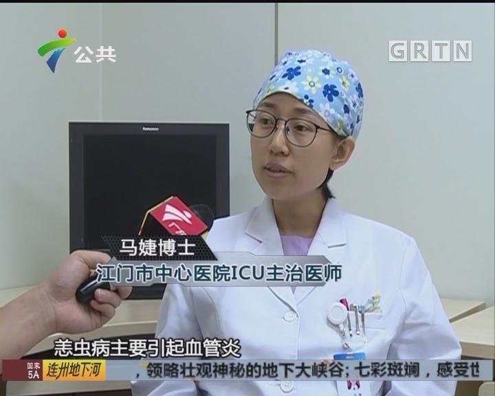 江门:老人进入ICU 竟是被恙虫咬伤