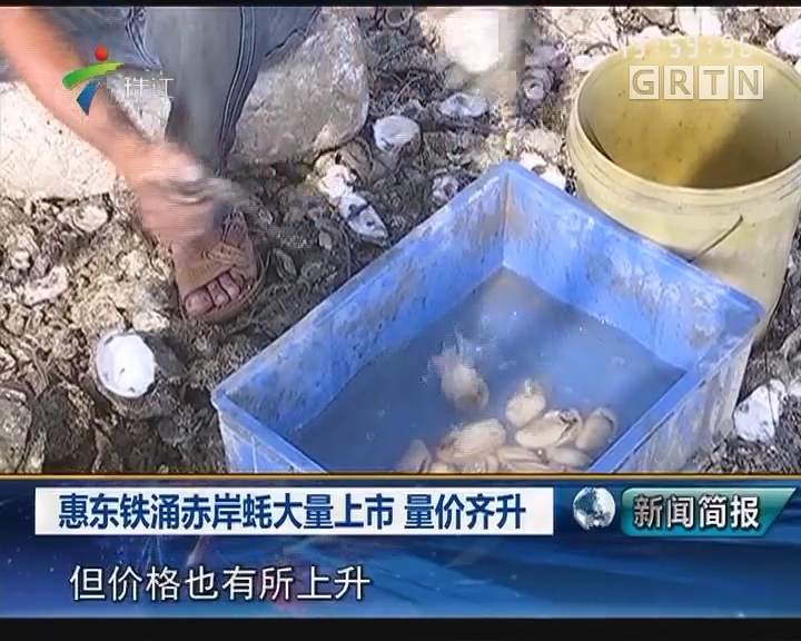惠东铁涌赤岸蚝大量上市 量价齐升