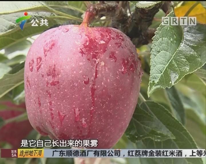 裴涛辉:辞掉城市工作 回乡推动苹果产业