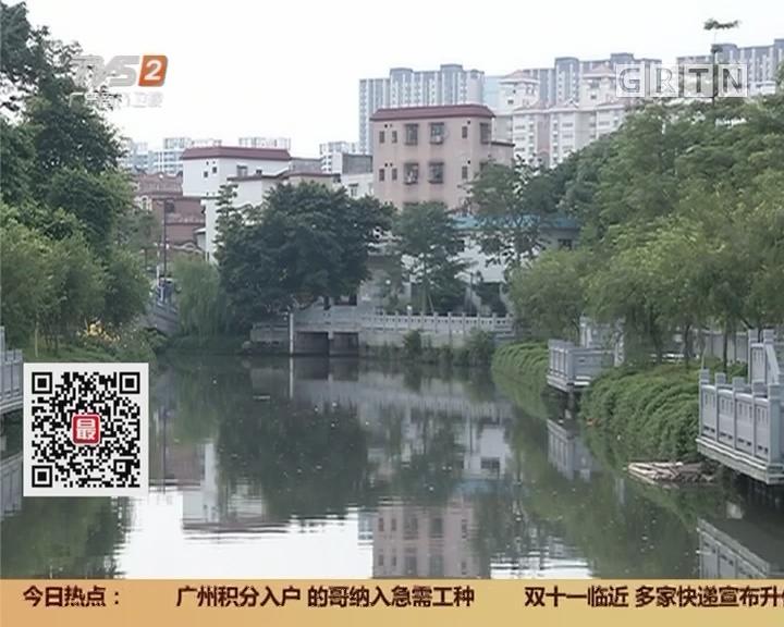 广州:荔湾湖投入食藻虫 修复水下生态