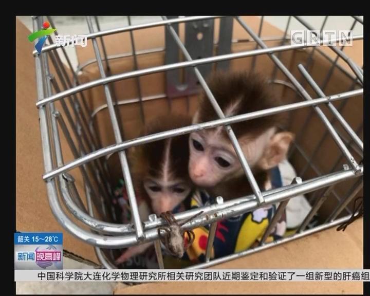 上海:诱捕猕猴当宠物 夫妻二人被刑拘