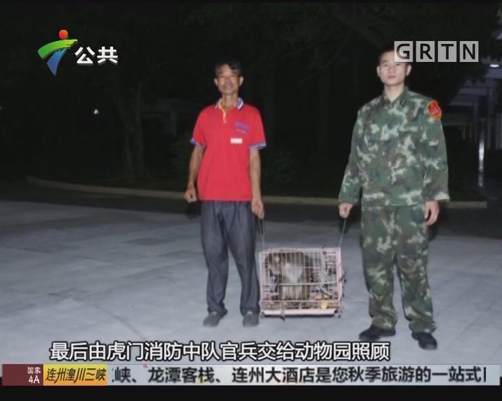东莞:工业园惊现猴子 消防出动抓捕