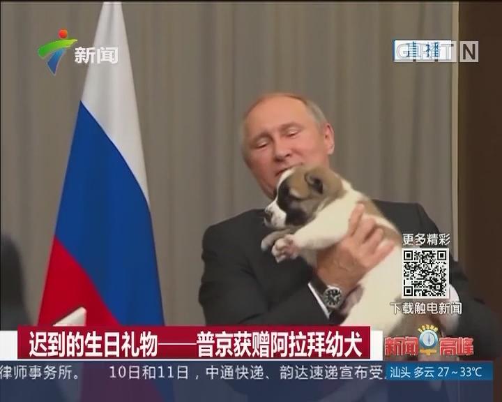 迟到的生日礼物——普京获赠阿拉拜幼犬