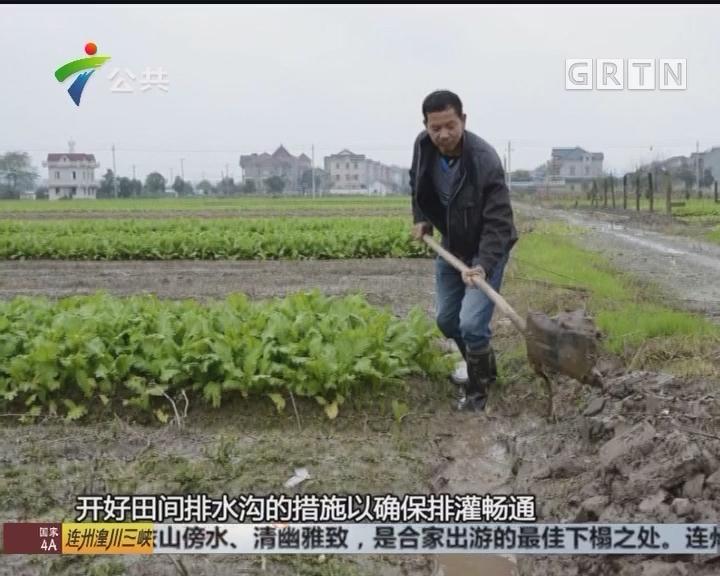 清远:数百亩水稻倒下 村民应加强台风防御