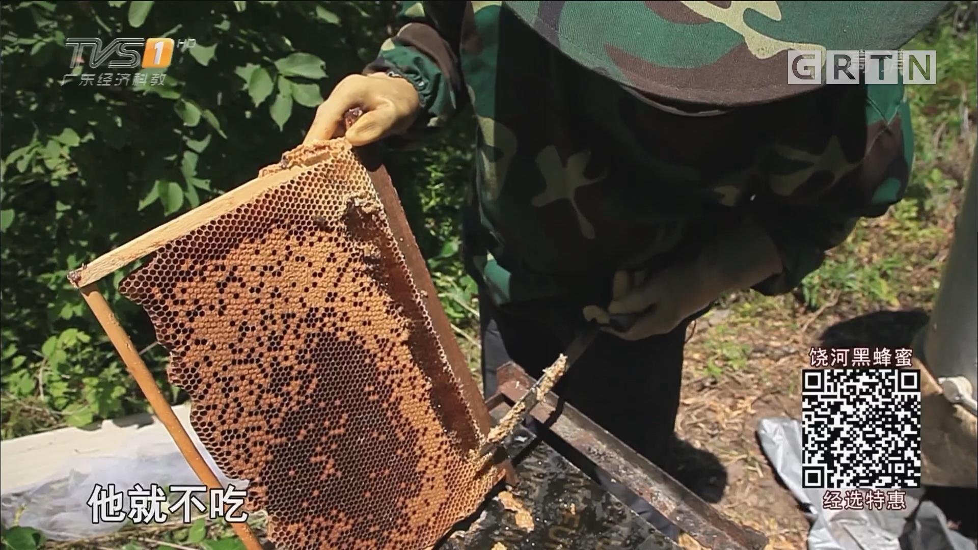 经选探秘:携手消费者探访黑蜂蜜原产地