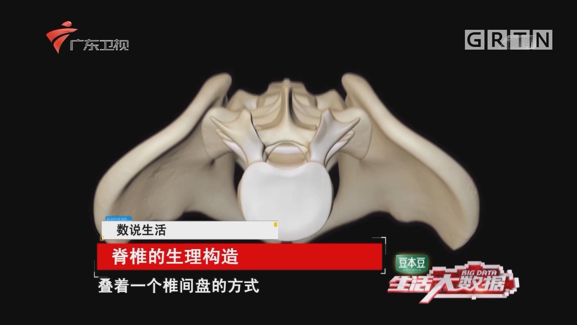 脊椎的生理构造