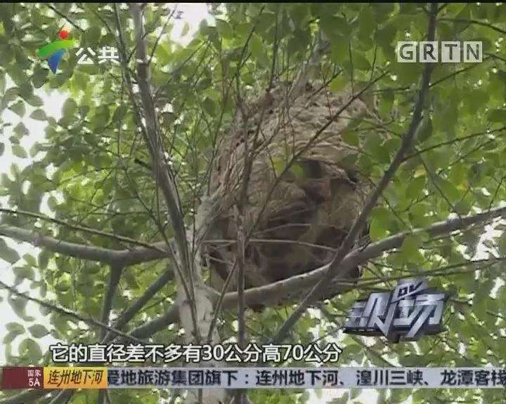 广州:创意园出现马蜂窝 消防端掉除隐患