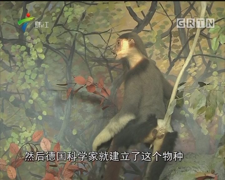 广州86中有全省唯一的动物博物馆