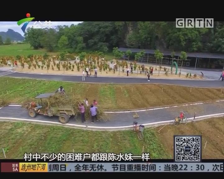 """致富有道在广东:""""以旅助农""""让乡村兴旺起来"""