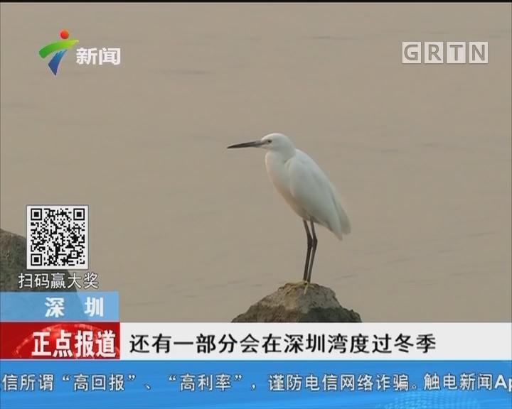 深圳:万鸟翔集 场面壮观