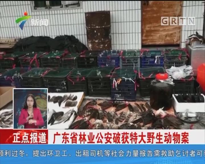广东省林业公安破获特大野生动物案