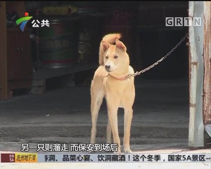 广州一高校学生 持棍当众敲击狗只