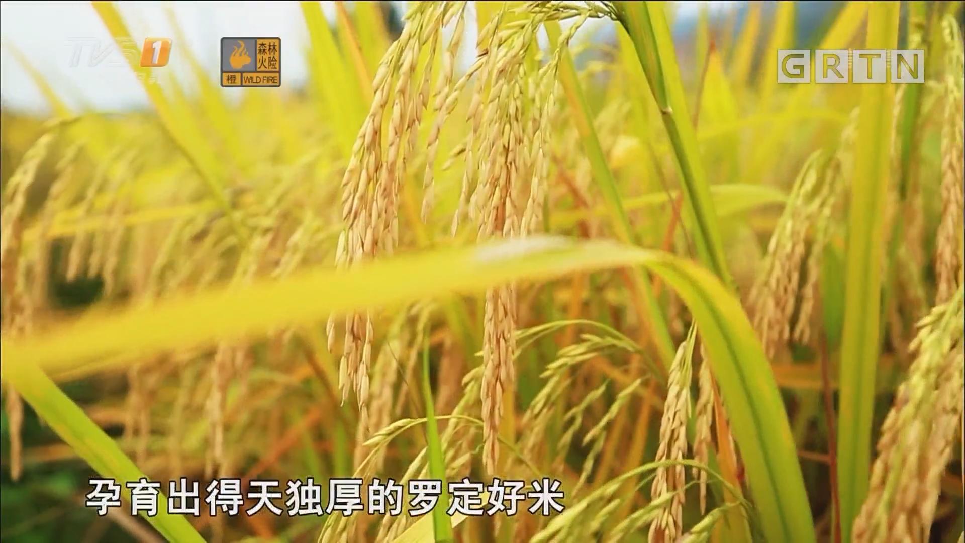 广东精准扶贫影像记录·我是书记我代言 罗定:好山好水出好米