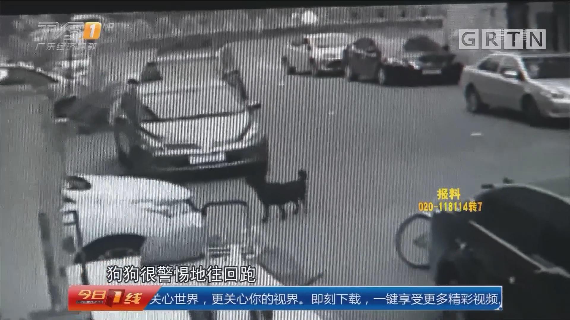 东莞:毒针射狗掳走盗窃 警方展开调查
