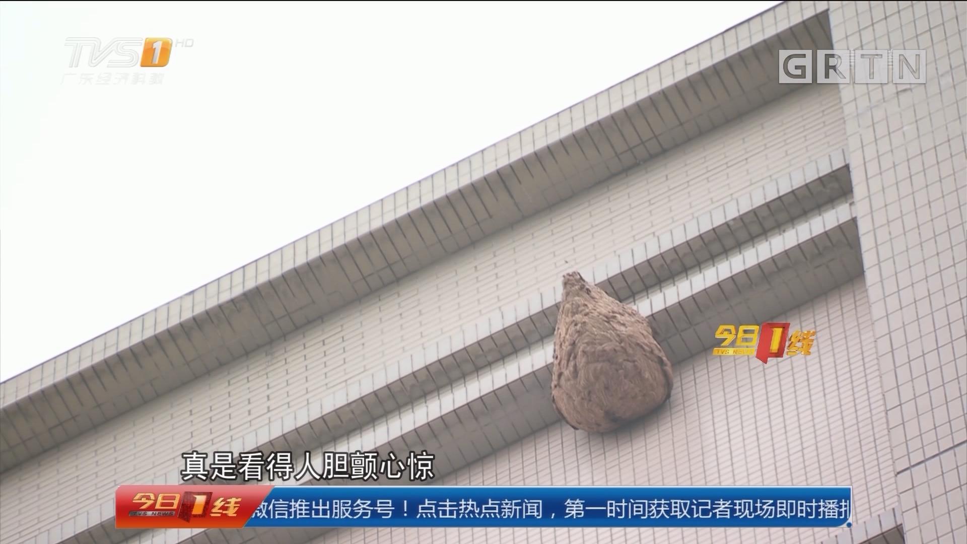 广州花都:40米高楼外挂蜂巢 消防为民除害