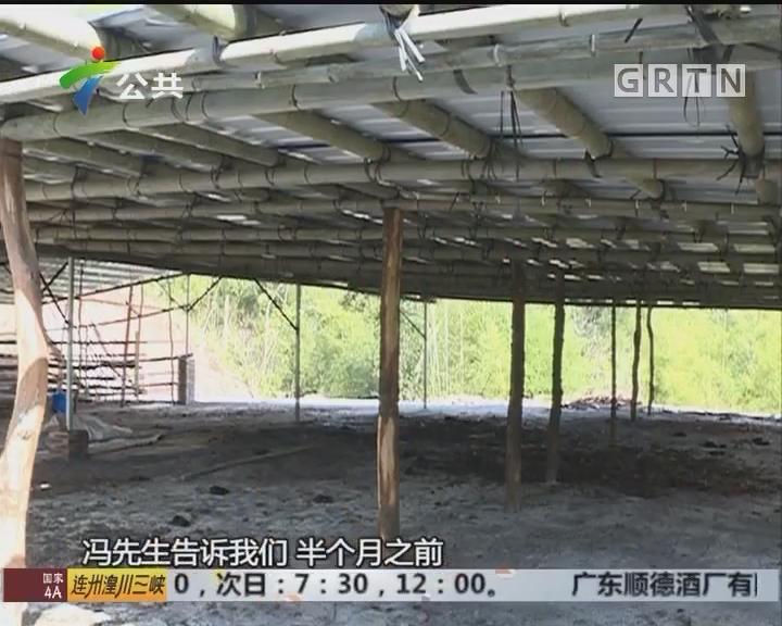 韶关:违建牛棚被拆除