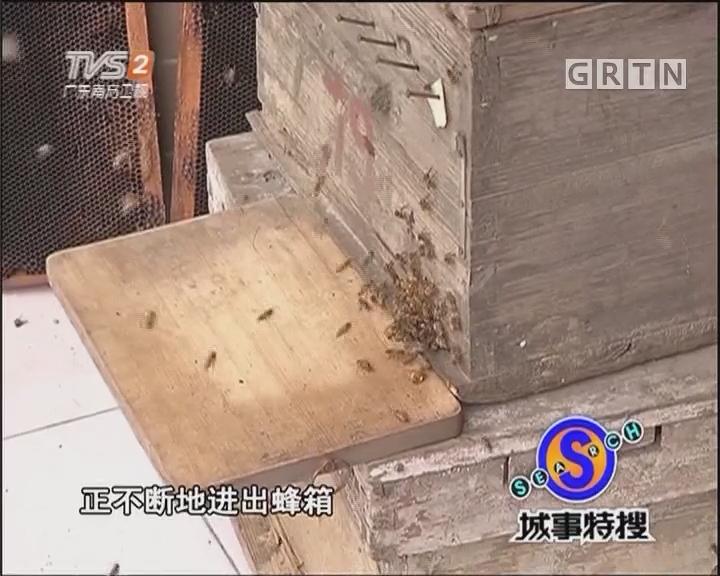 """""""城市养蜂人"""" 邻居心慌慌"""