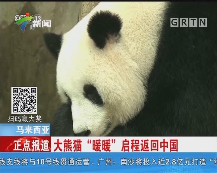 """马来西亚:大熊猫""""暖暖""""启程返回中国"""