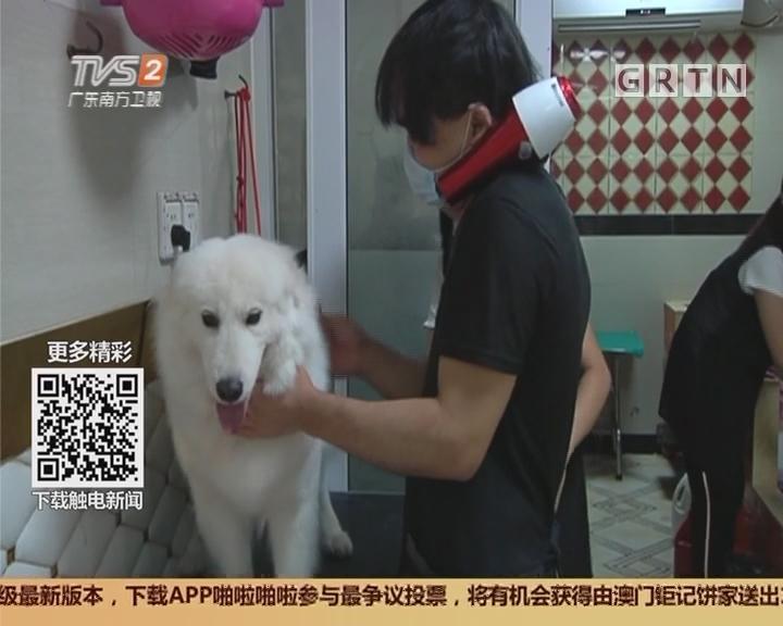 广州:宠物美容兴起 专业又高级