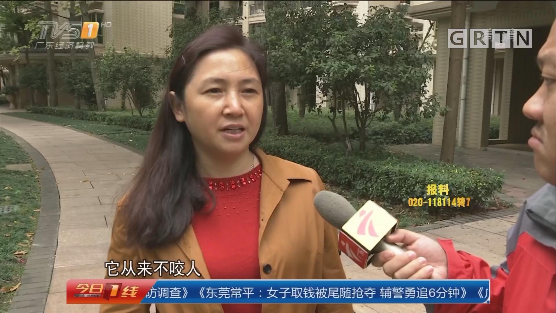 广州番禺区:30只猫狗突死亡 业主质疑有人投毒