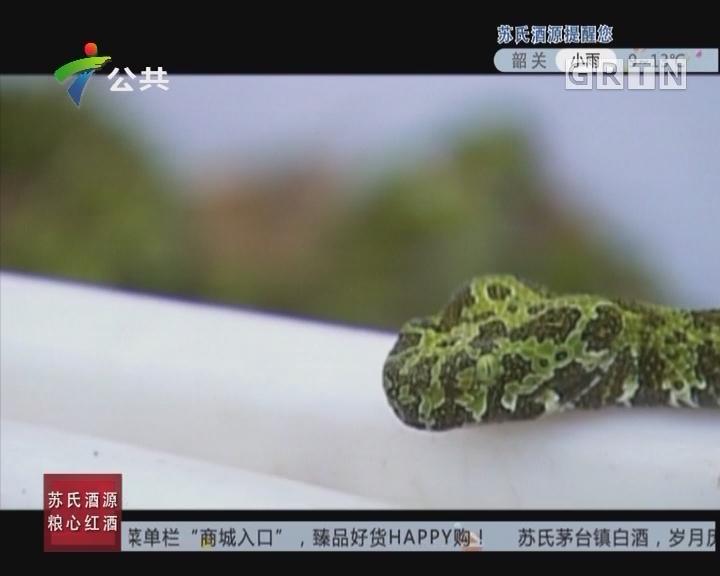 """[2017-11-19]天眼追击:揭秘""""小青龙"""""""