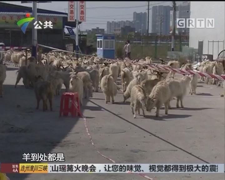农贸市场烧成火海 数十只牲畜难逃一劫