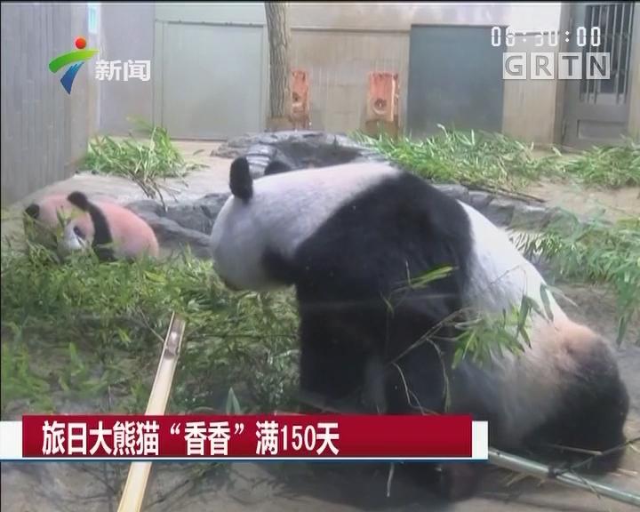 """旅日大熊猫""""香香""""满150天"""