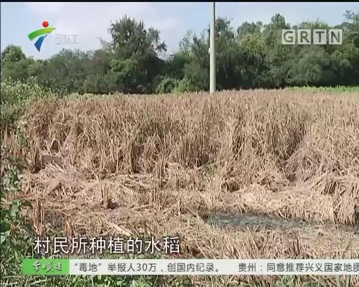 湛江吴川:塑料厂无证生产 农田连年失收