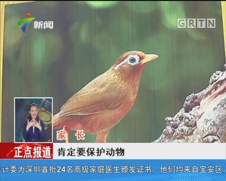 广州:候鸟误撞入居民家事件频现
