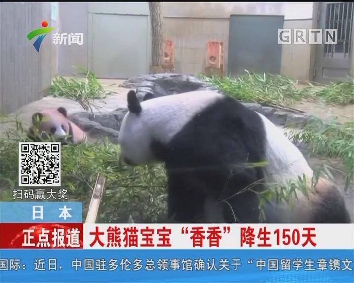 """日本:大熊猫宝宝""""香香""""降生150天"""