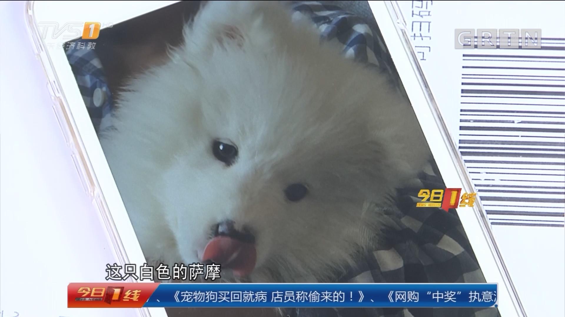 广州:宠物狗买回就病 店员称偷来的!