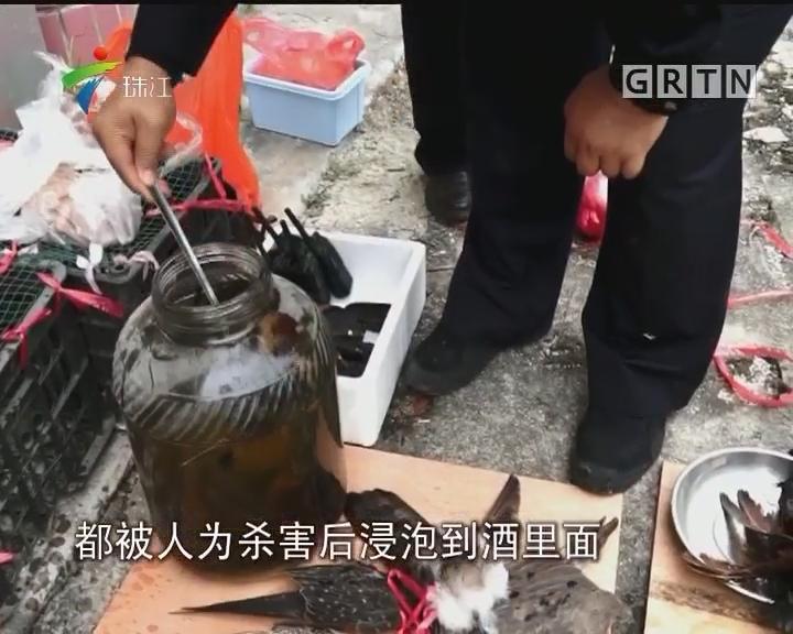 珍稀动物被捕杀泡酒 警方一网打尽