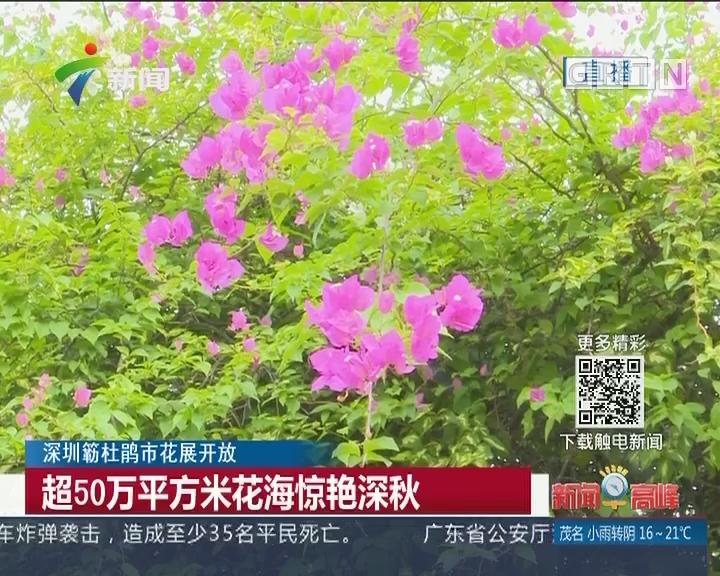 深圳簕杜鹃市花展开放:超50万平方米花海惊艳深秋