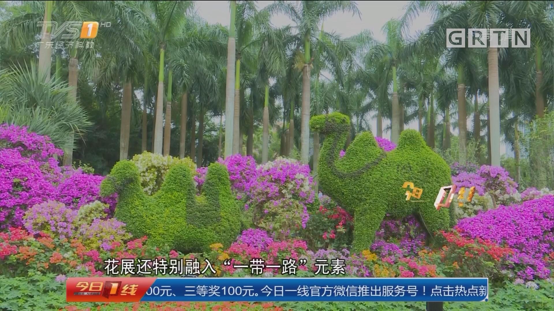 深圳:第十九届簕杜鹃花展今起开放