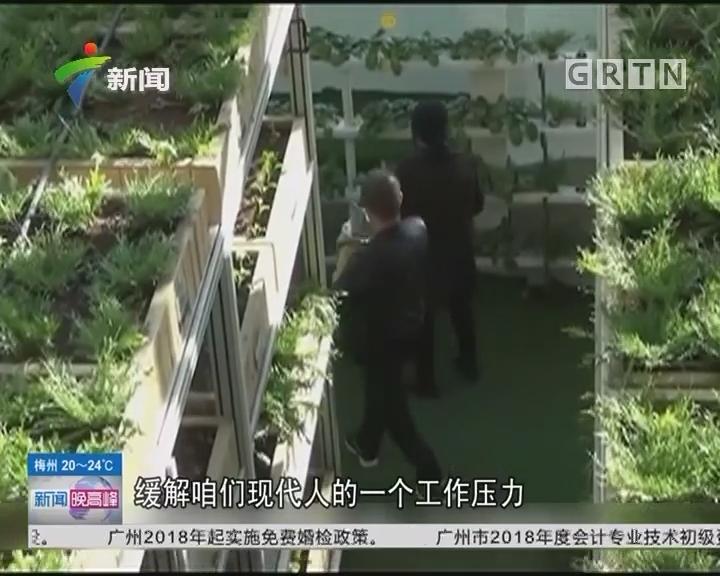 """城市农场:自己动手种菜 现实版""""开心农场"""""""