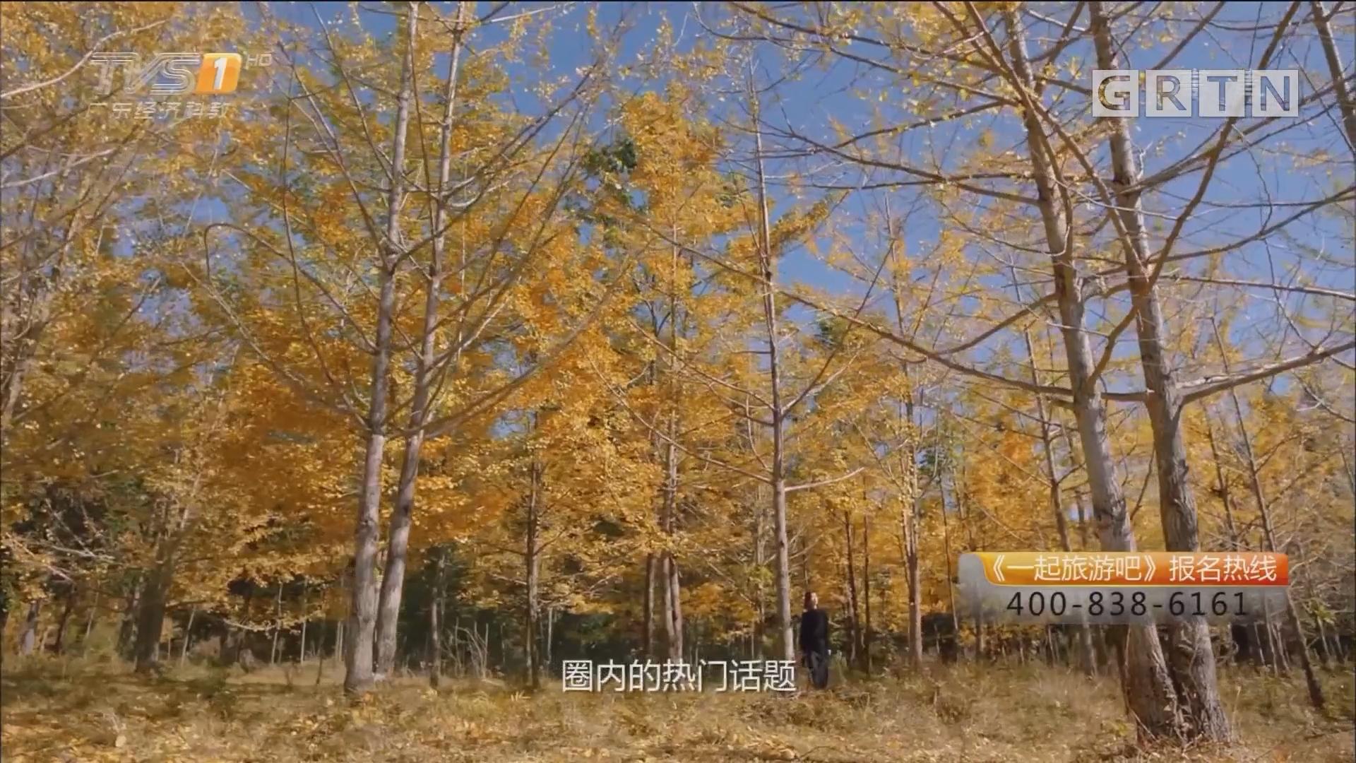 广西——银杏海洋乡