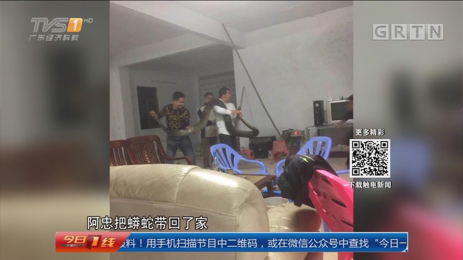 惠州:村道现12斤重蟒蛇 村民出手捕获