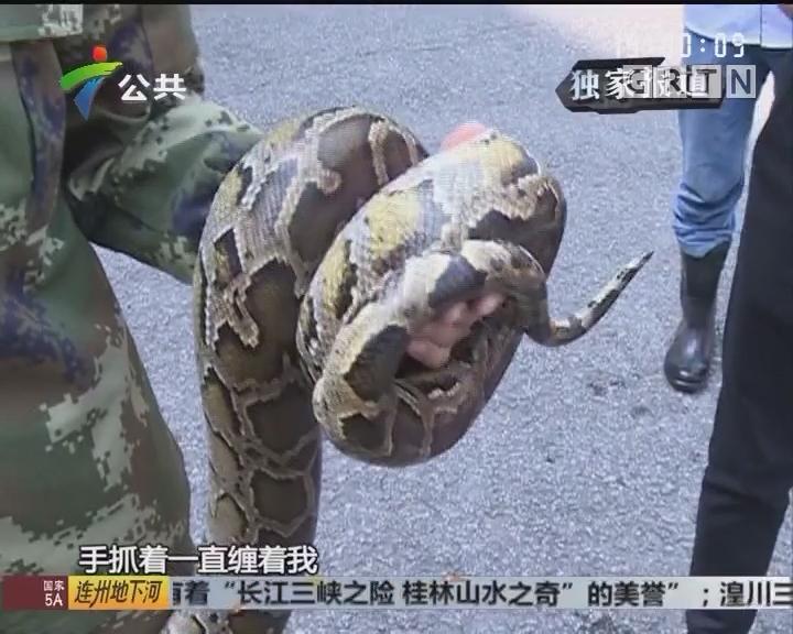 居民区出现蟒蛇 专家推测是出逃宠物