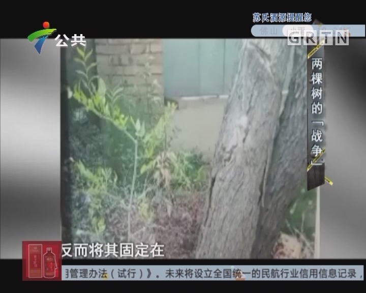 """[2017-11-15]天眼追击:两棵树的""""战争"""""""