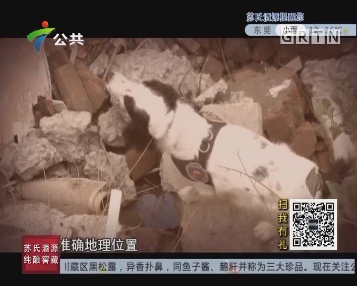 """[2017-11-22]天眼追击:废墟上特殊的""""搜救员"""""""