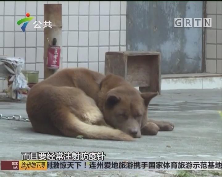 肇庆:狗只突然咬人 民警快速击毙
