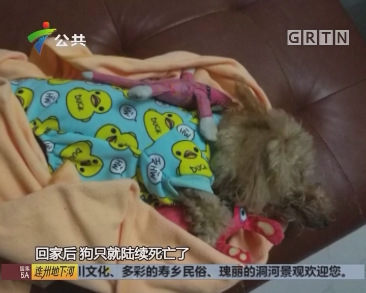 业主投诉:小区疑遭投毒 猫狗纷纷死亡