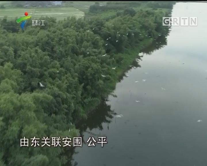 海丰:水鸟之乡喜迎北方客
