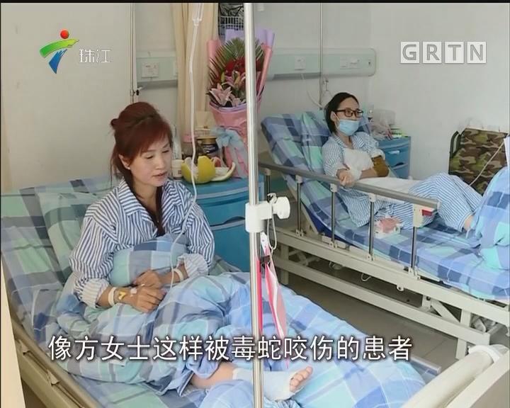 深圳:观蛇被咬 女子险断臂