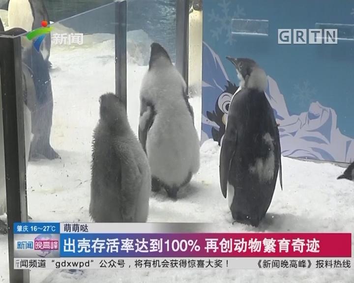 萌萌哒:9只帝企鹅宝宝首展 精灵可爱