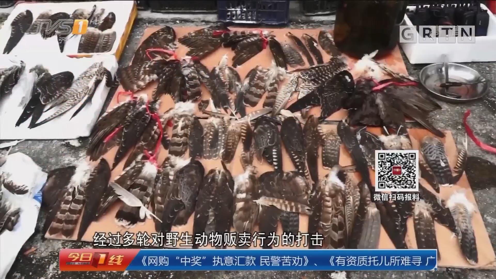 湛江:省林业公安破获特大出售野生动物案