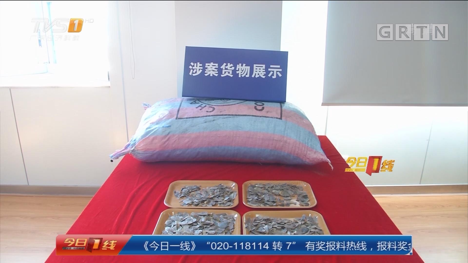 深圳海关:历史最大宗!走私穿山甲鳞片11.9吨