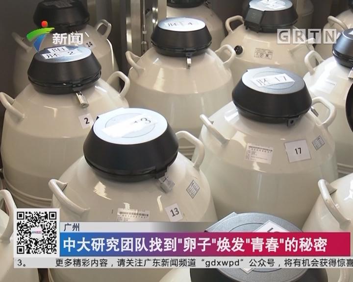 """广州:中大研究团队找到""""卵子""""焕发""""青春""""的秘密"""
