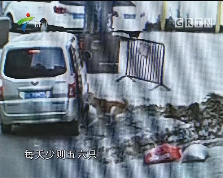 广州花都警方打掉盗贩狗团伙